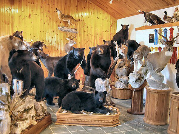 Pennsylvania Taxidermist Brown Bear Taxidermy Studios